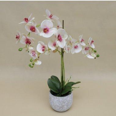 Storczyki Maszeu Hurtownia Ozdoby Dekoracyjne Kwiaty